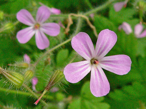 Flowers Nwnature Net